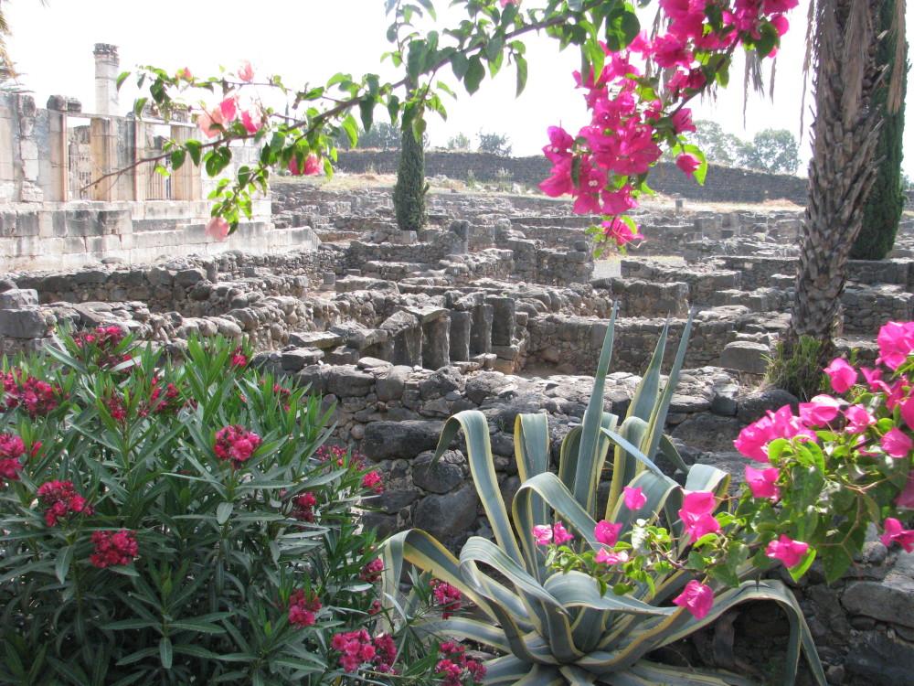 Israel - Capernaum flowers