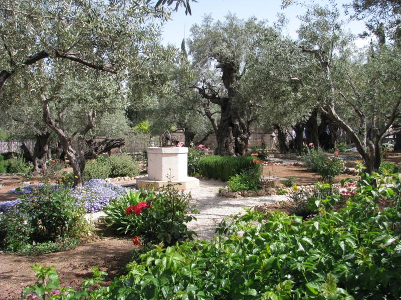 Israel - Garden of Gethsemane